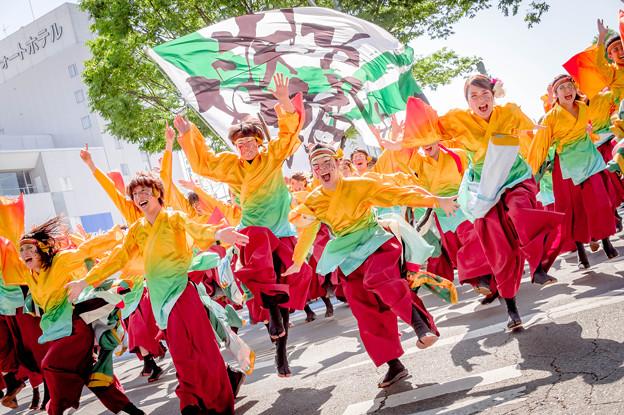 Photos: よさこいinおいでん祭2019 静岡大学よさこいサークルお茶ノ子祭々