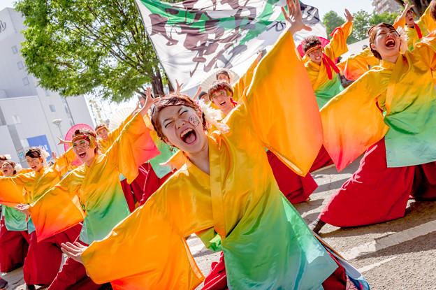 よさこいinおいでん祭2019 静岡大学よさこいサークルお茶ノ子祭々