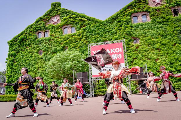 YOSAKOIソーラン祭り2019 北の湘南だて七福神