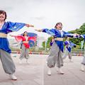 Photos: 堺よさこいかえる祭り2019 舞乱~MAIRAN~