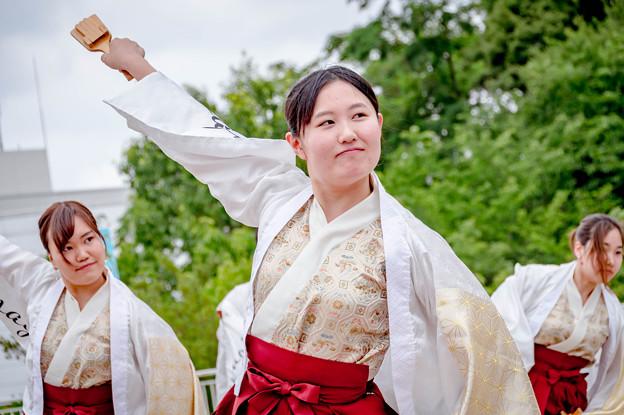 堺よさこいかえる祭り2019 桃山学院大学よさこい連「真輝-SANAGI-」