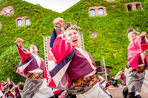 YOSAKOIソーラン祭り2019 名古屋学生チーム『鯱』