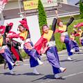 斐川だんだんよさこい2019 しんじ恋踊り連毘盧遮那