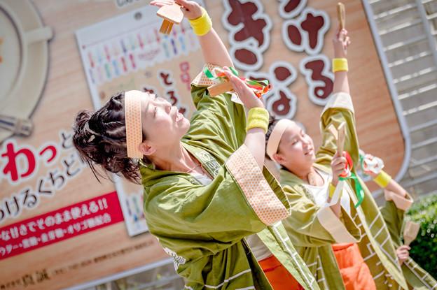 にっぽんど真ん中祭り2019 SAIKA -菜花-