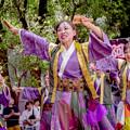 にっぽんど真ん中祭り2019 あぐい騰