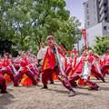 Photos: にっぽんど真ん中祭り2019 肥後真狗舞~九州がっ祭~
