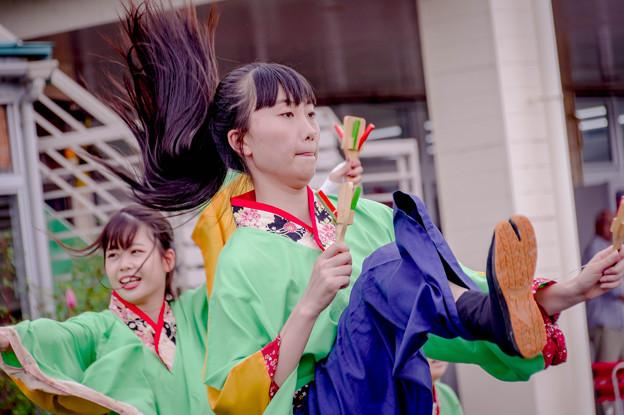 若狭おばまYOSAKOI祭2019 よさこい美山山舞麗