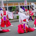 Photos: 御食国若狭おばまYOSAKOI祭2019 雅夢舎楽