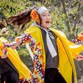 YOSAKOI高松祭り2019 TAICHI with 白虎連