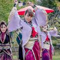 Photos: YOSAKOI高松祭り2019 四国よさこいチーム百華夢想