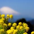 Photos: 富士山アラモード