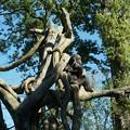 長ネギ持って木の上