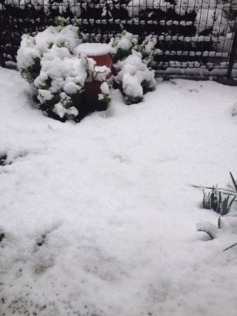大雪警報でたらしい