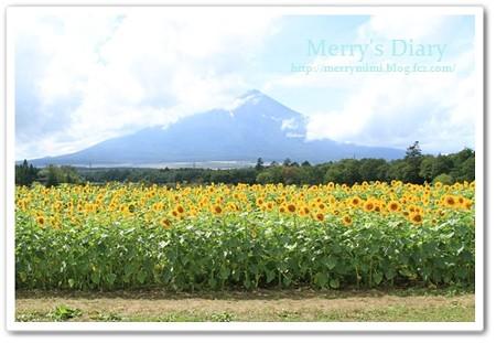 富士山お顔見せて