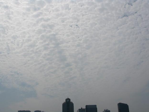 厚いウロコ雲がビッシリ