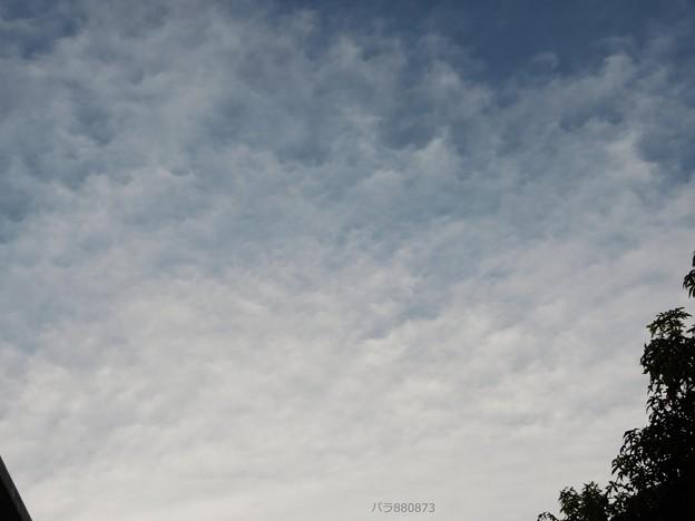 薄氷のような雲が広がる