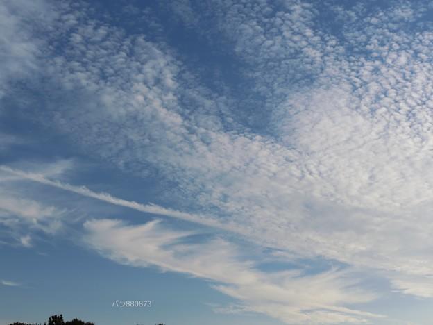 ウロコ雲、イワシ雲の間を飛行機雲の秋の空!