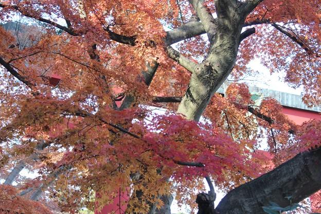 25.11.29志波彦神社鳥居付近の紅葉