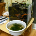 Photos: 水槽リセット時の流木他