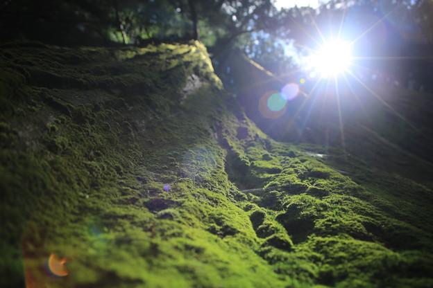 Photos: 逆光