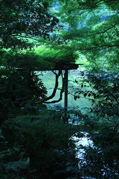 新宿御苑 2