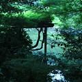 写真: 新宿御苑 2