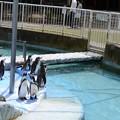 Photos: 古城公園動物園1
