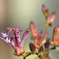 一番先の花