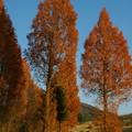 Photos: 深まる秋色