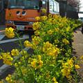 Photos: にこにこバス