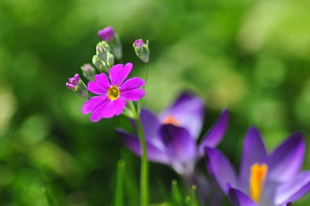 Photos: かわいい春色が