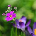 かわいい春色が