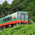 Photos: 緑の中の緑色