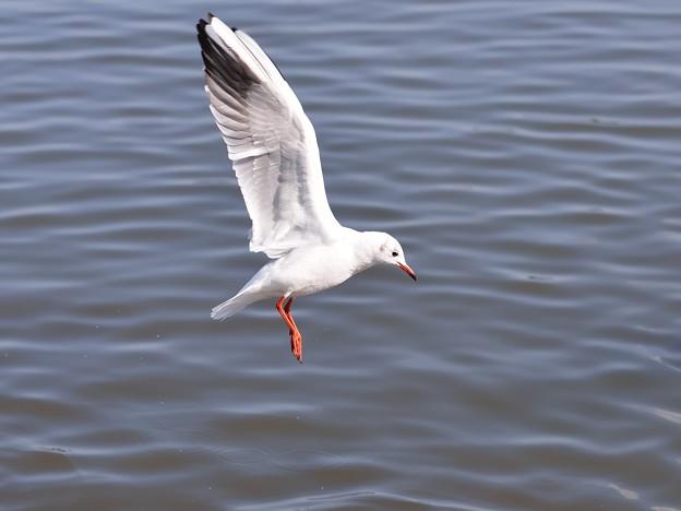 Photos: 白い翼