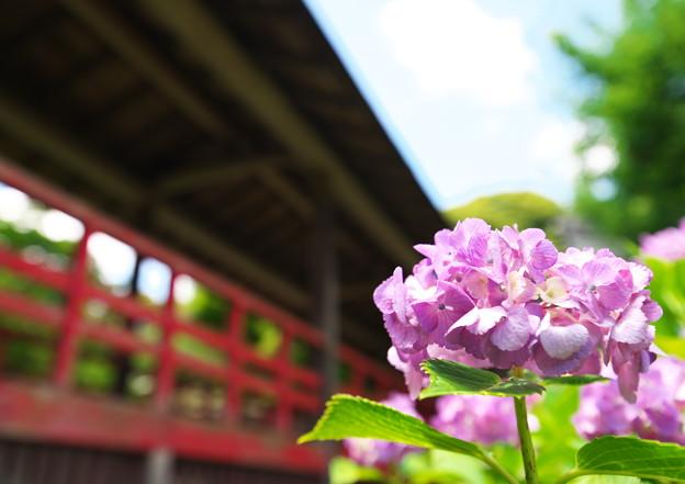 Photos: 本土寺その2