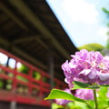 写真: 本土寺その2