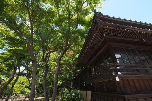 本土寺その4
