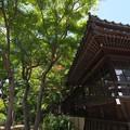 Photos: 本土寺その4