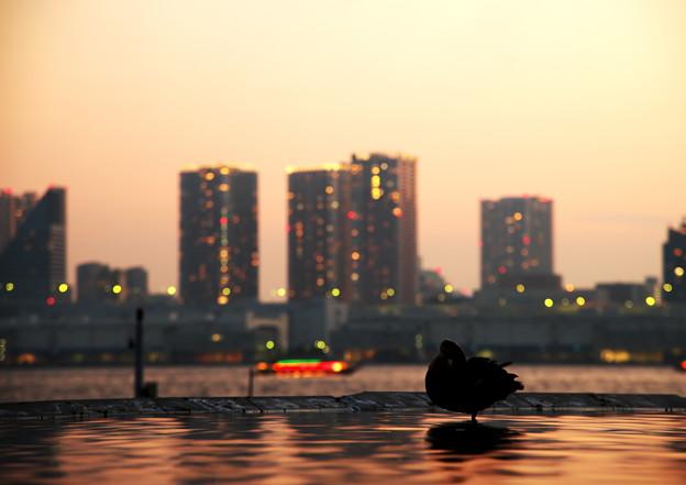 写真: もうすぐ日没・・・