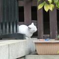 Photos: 福を招くナミちゃん