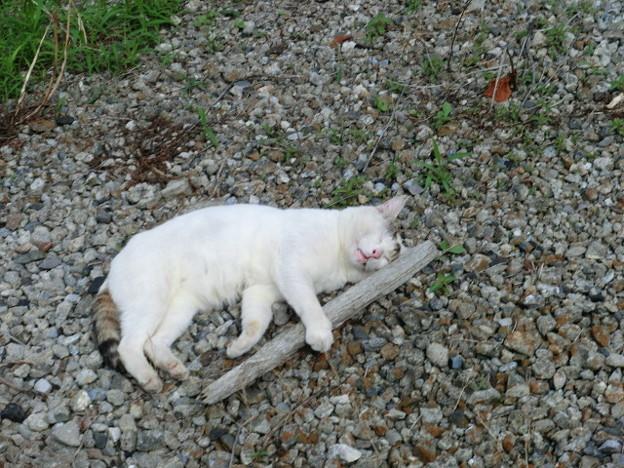 Photos: 枝の抱き枕に癒される猫ちゃん。