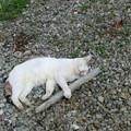 枝の抱き枕に癒される猫ちゃん。