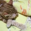 Photos: クロス腕枕