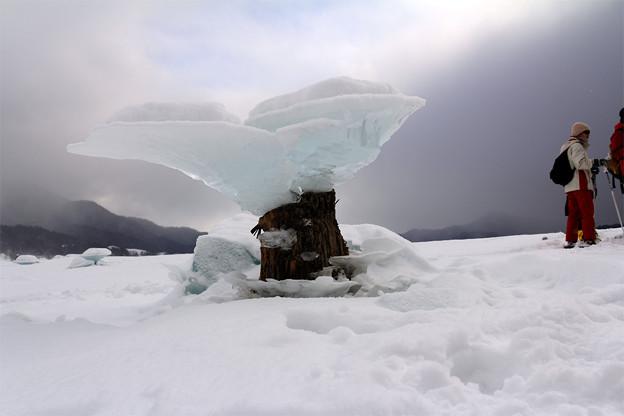 ハートのキノコ氷