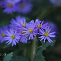 Photos: 岡山 深山公園