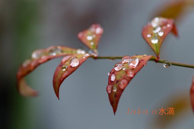 雨上がり水滴1