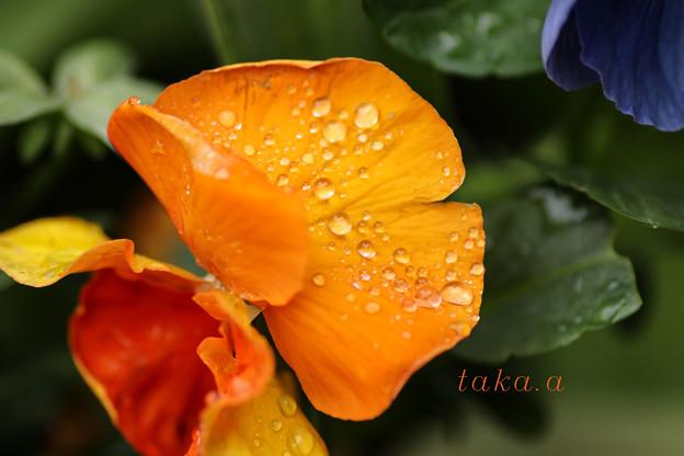 雨上がり水滴4