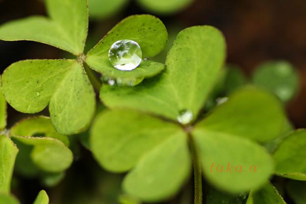 雨上がり水滴7