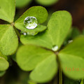 Photos: 雨上がり水滴7
