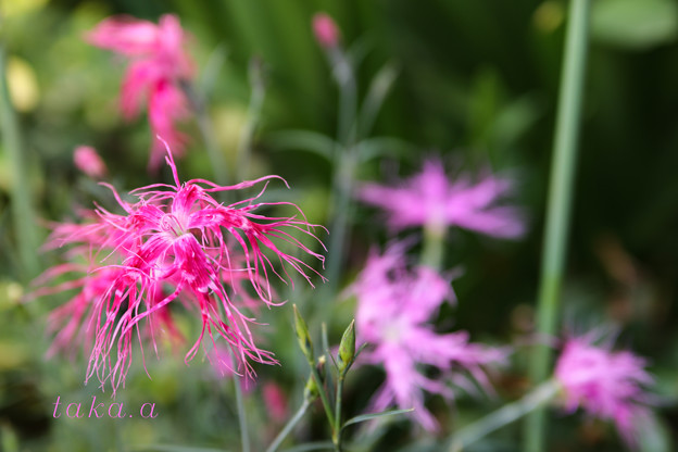 Photos: IMG_926420190524